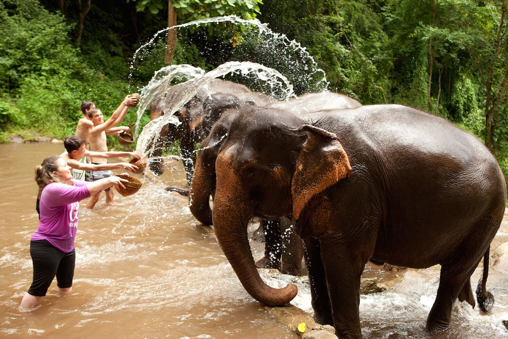 Image result for Ethical elephant trips