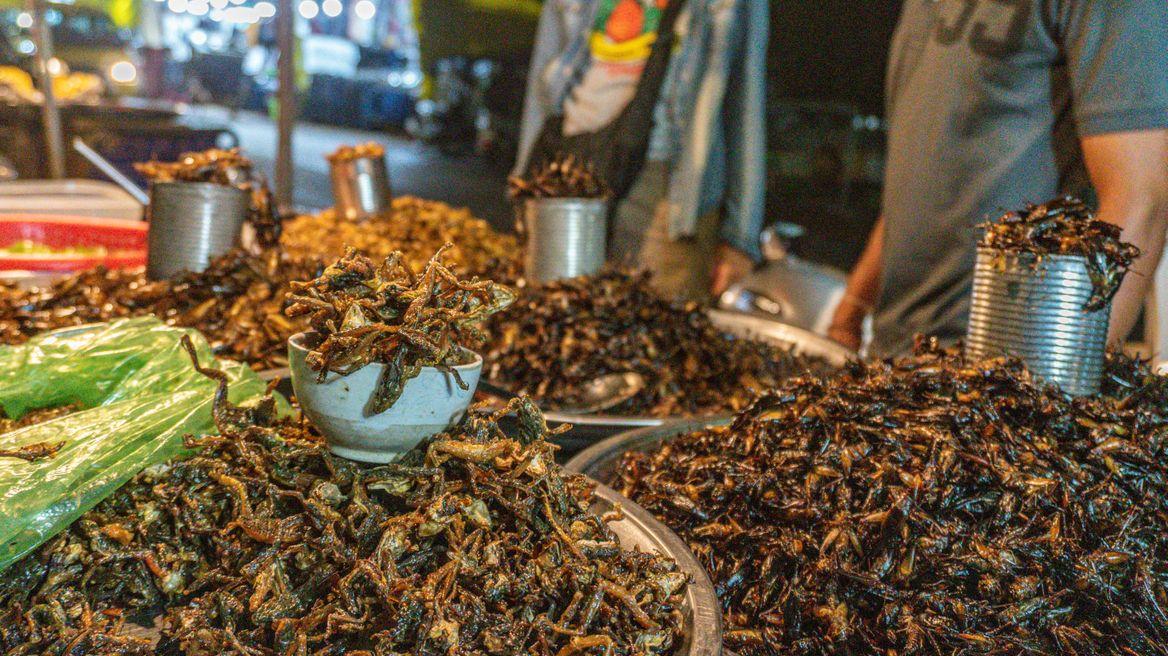 Bugs street foods testing