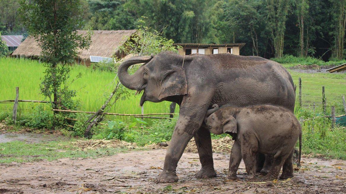 Doi Intanon Elephant House