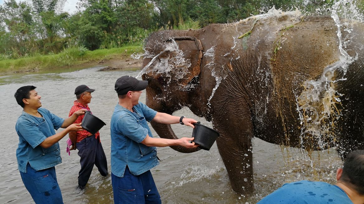 Chiang Mai Ethical Elephant Tour: Feeding elephants.
