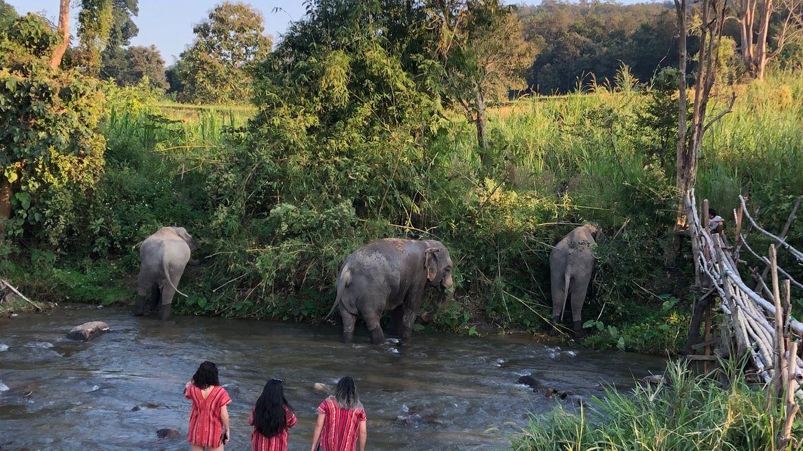Elephant freedom