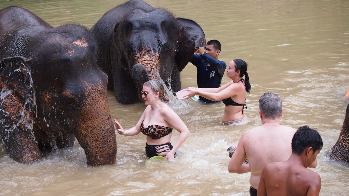 Swim and bath elephants