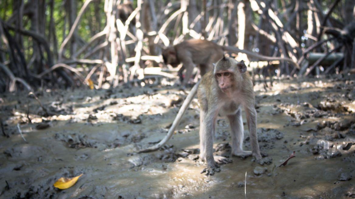 Pop up Thai monkeys beside the local river