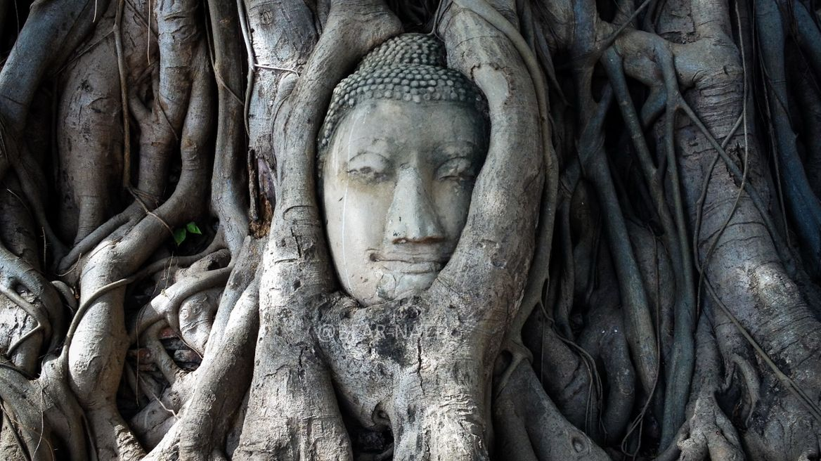 The head Buddha image in the tree root at Wat Mahathat