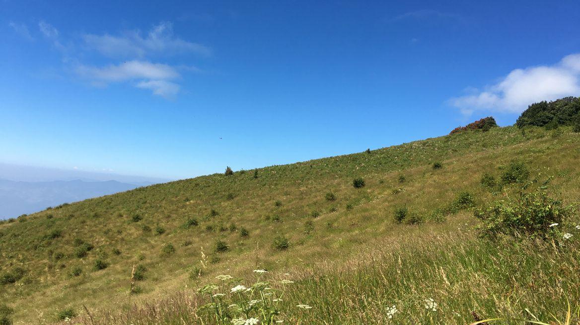 Alpine Field