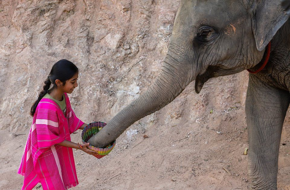 Take your time to feed elephant very closely.