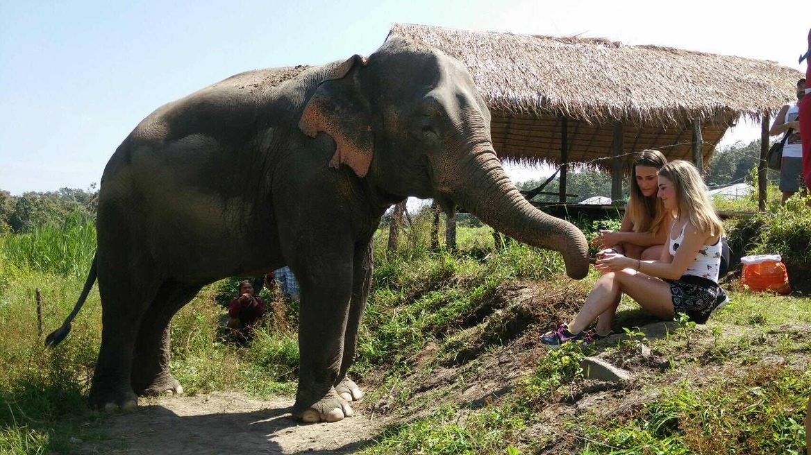 Chiang Mai Tour: Ethical Elephant Sanctuary