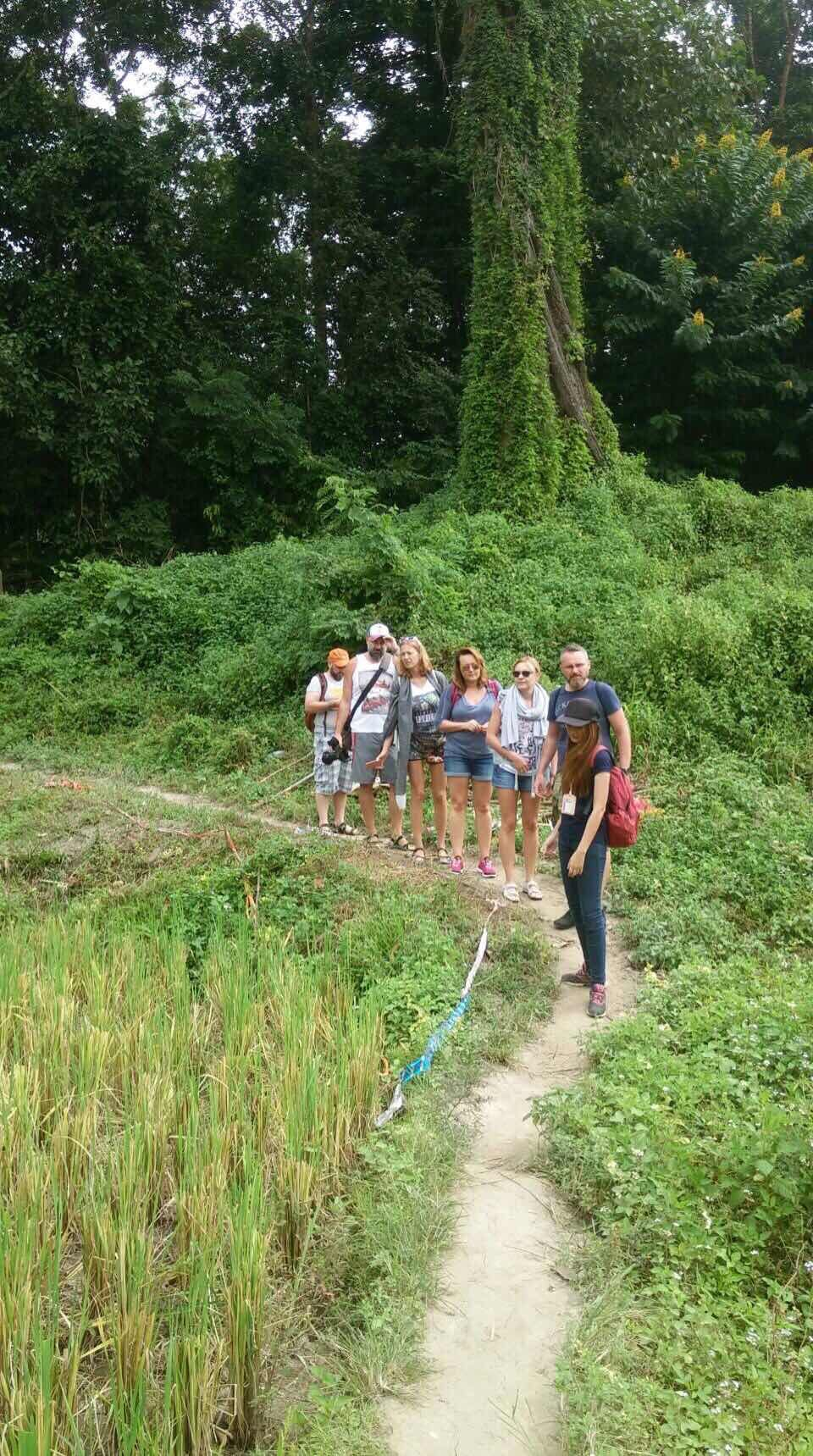 Chiang Mai Tour: Forest Hiking