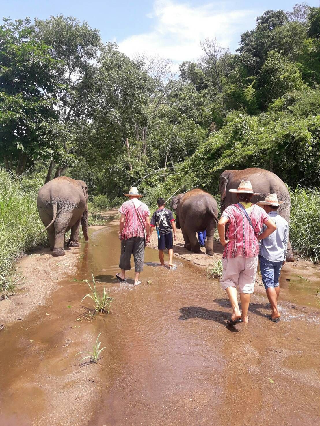 Walk with elephants to the river