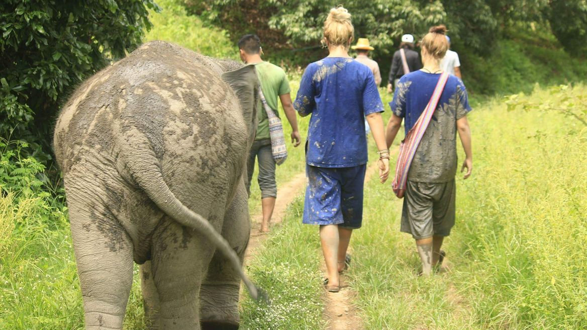 Walk together and learn their living in the jungle.