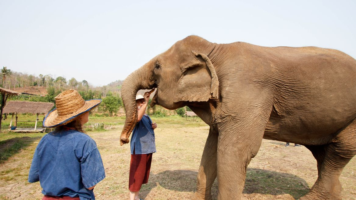 Feed an elephant