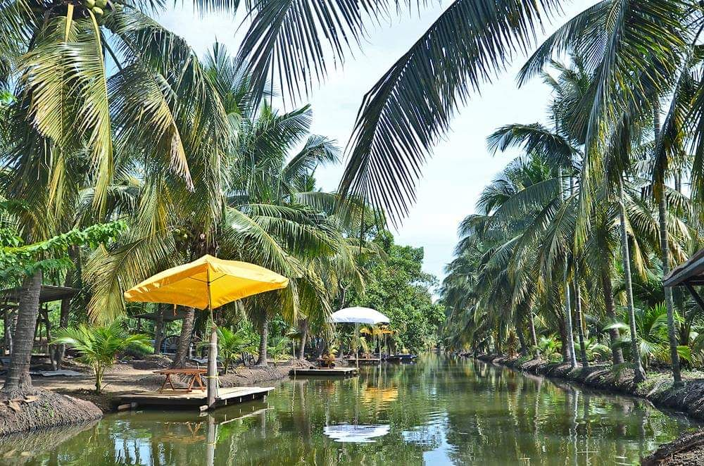 Coconut farm (boating river)