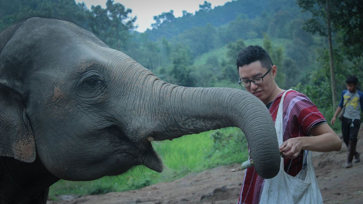 Chiang Mai Tour: Ethical Elephant Care