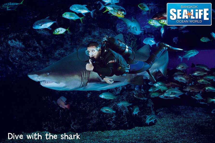 Dive with the shark