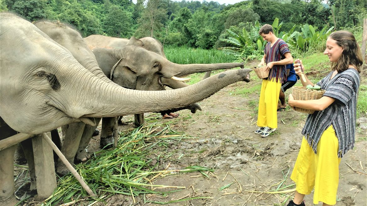 Ethical Elephant Tour in Chiang Mai
