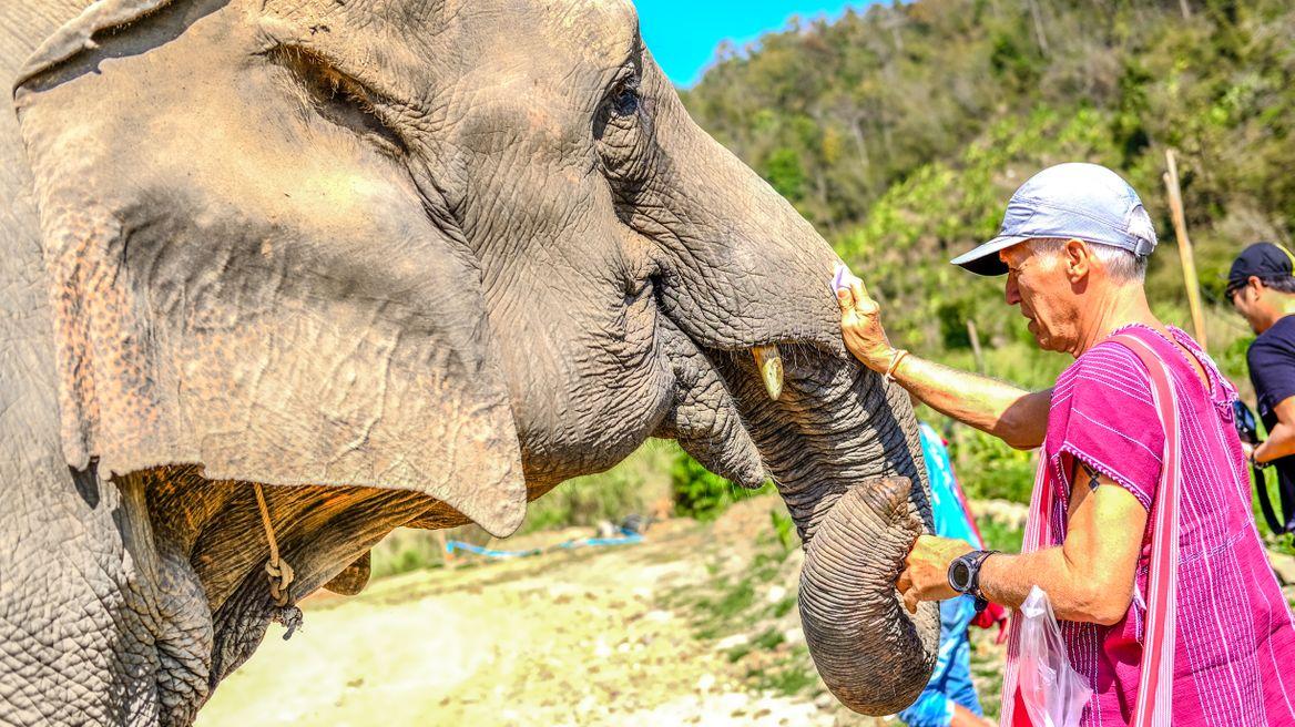 Meet elephant