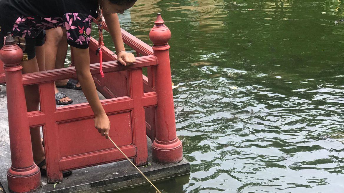 Feeding a Turtle