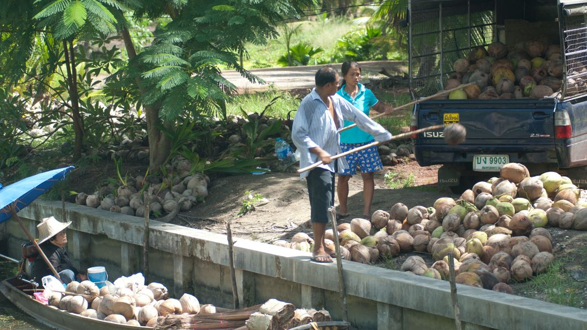 Coconut sugar farm is very famous here