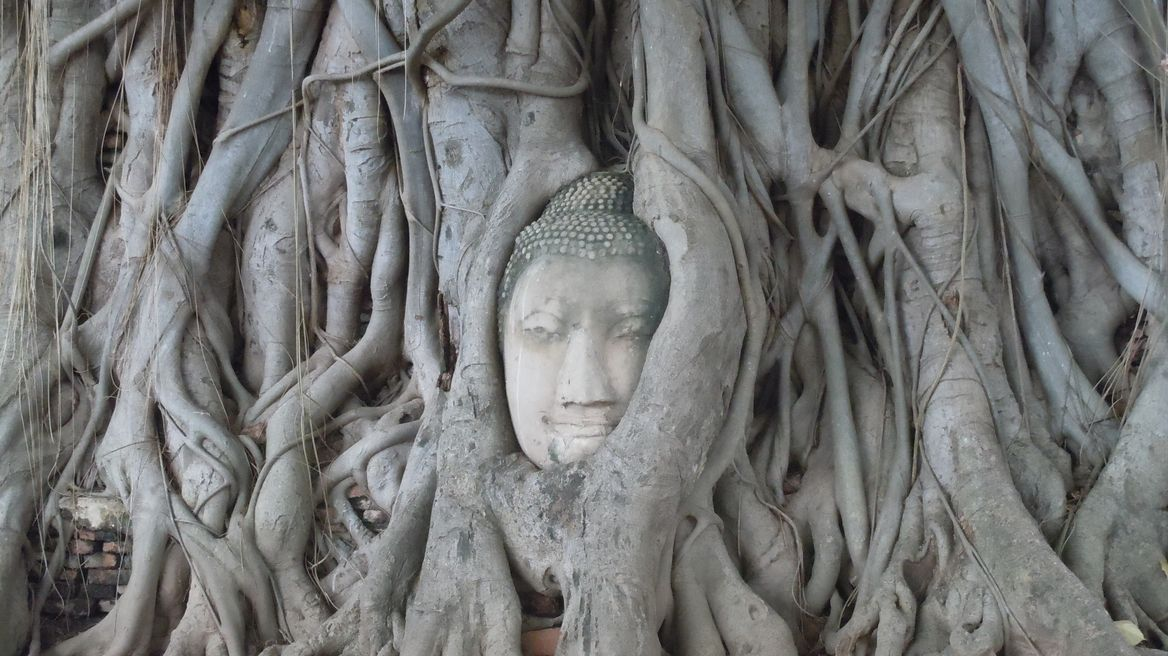 Head Buddha in the tree root