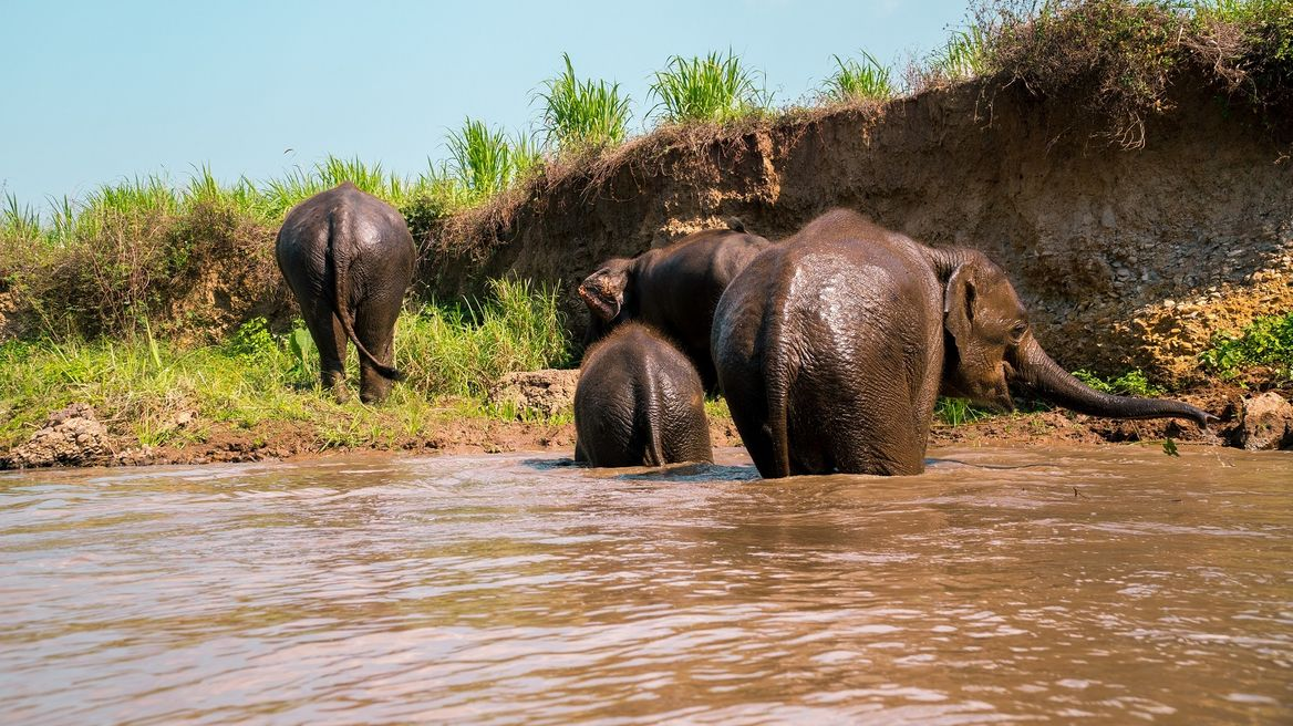 Elephants cooling down in the local river