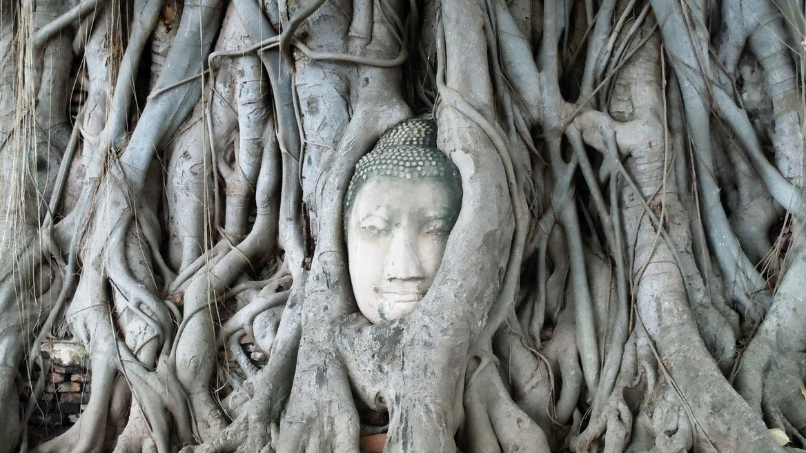 The Buddha head in the Tree root