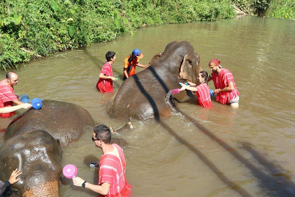 Batheing elephants