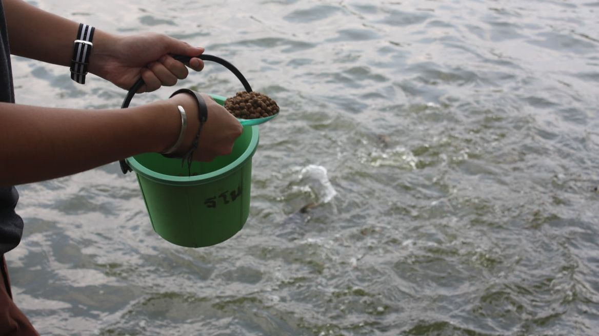 Thailand: Feed the fish