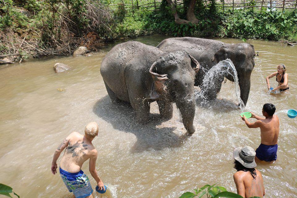 Elephant Park