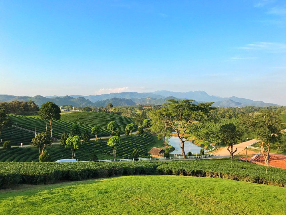 Choui Fong tea plantation : Panoramic view of mountains and tea plantation.