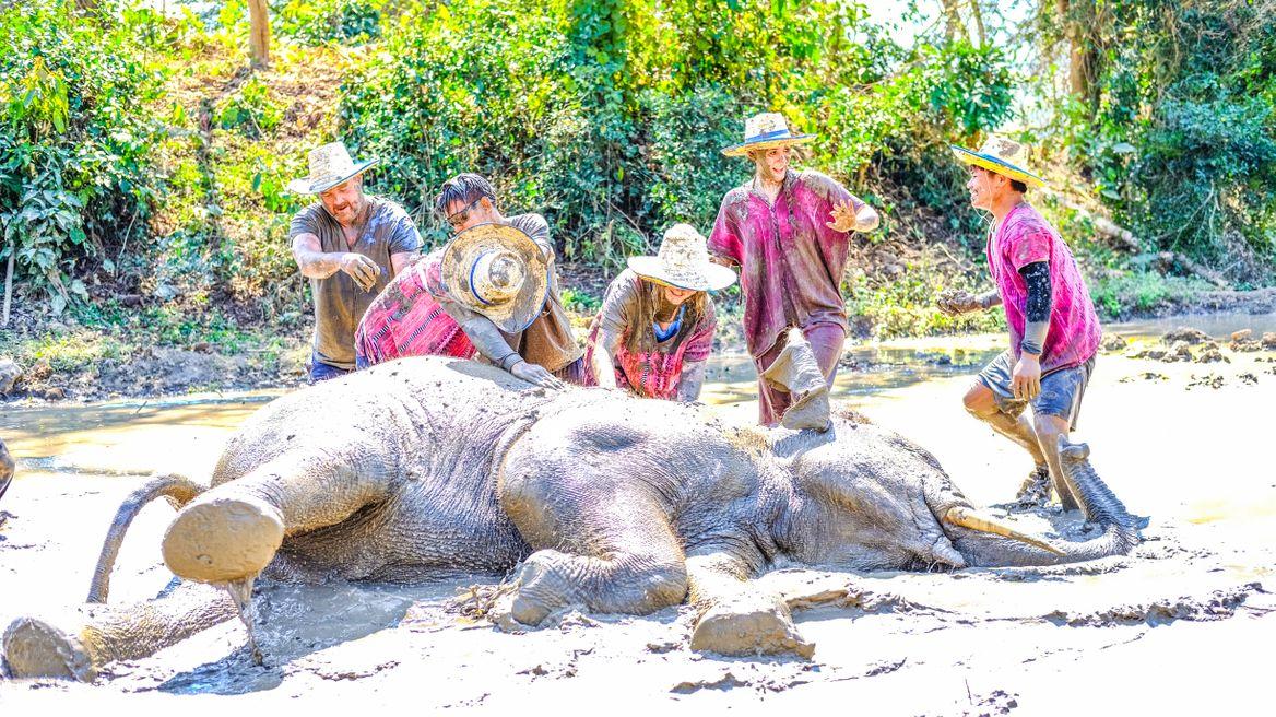 Mud spa with elephants