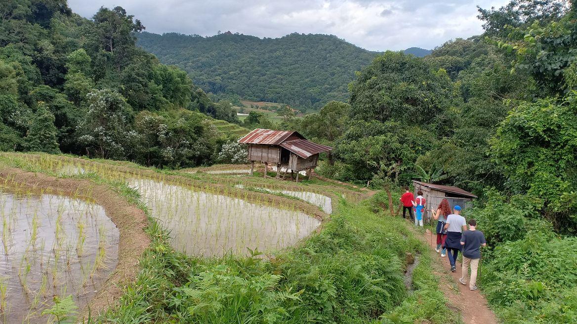 Rice fields terrace