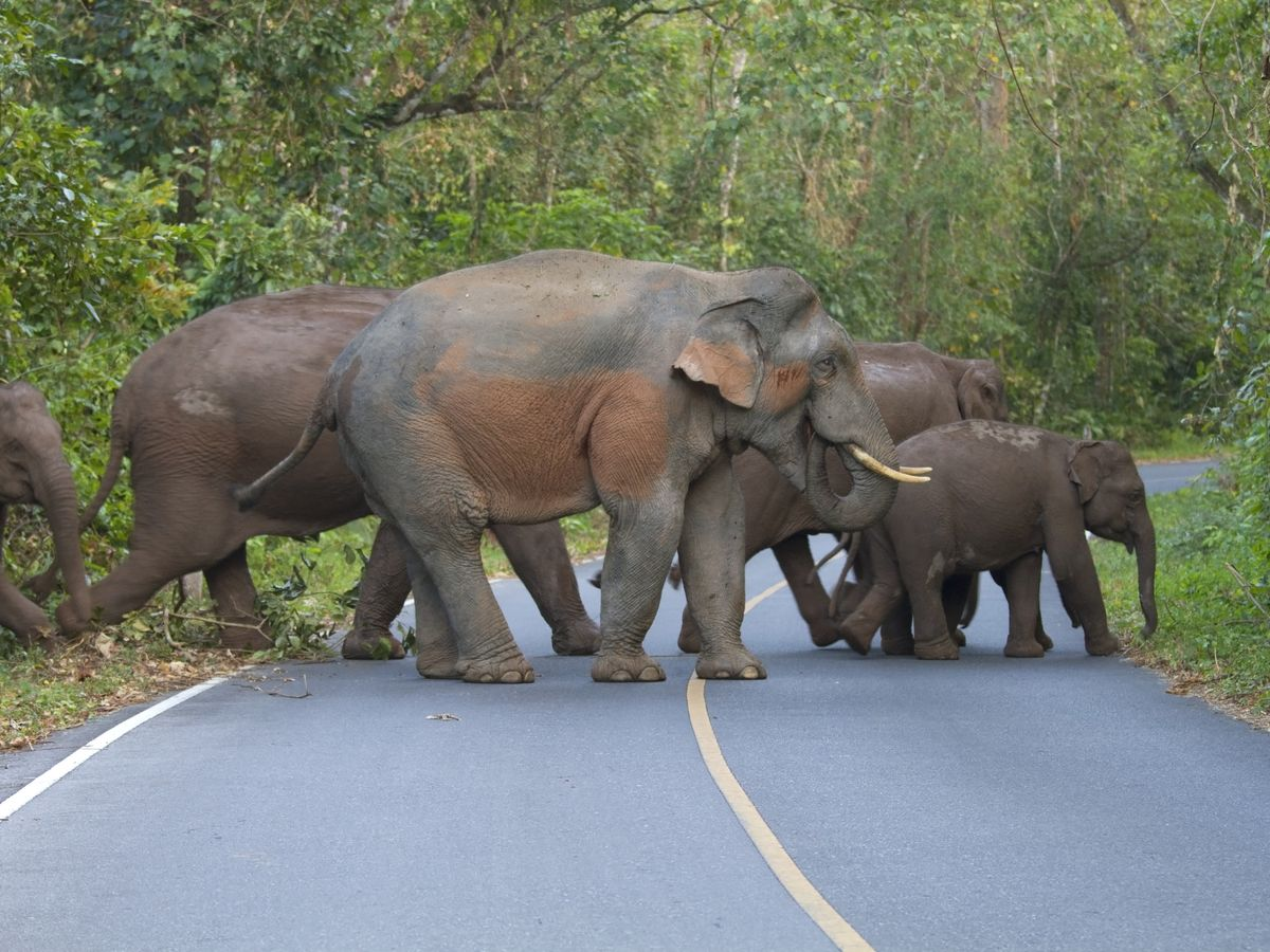Khao Yai National Park from Bangkok: Watch the Elephants Roam!