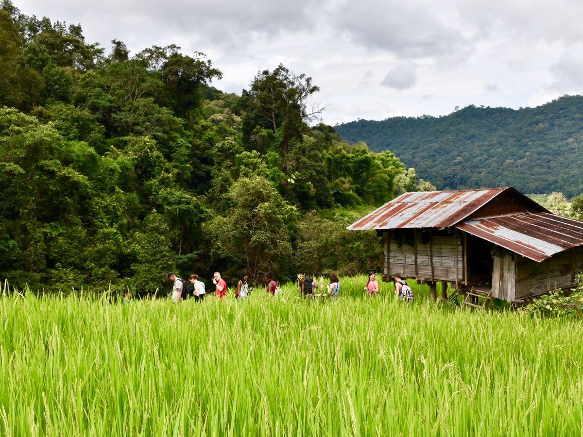 Chiang Mai Private Trekking Tour: Pha Dok Siew, Doi Inthanon