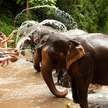 Bathe the elephants