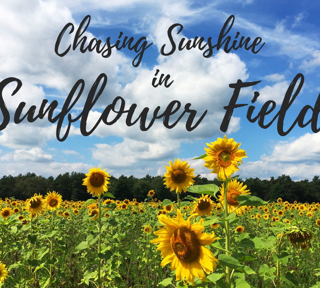 Sunflower Field Tour from Bangkok & Ayothaya Floating Market
