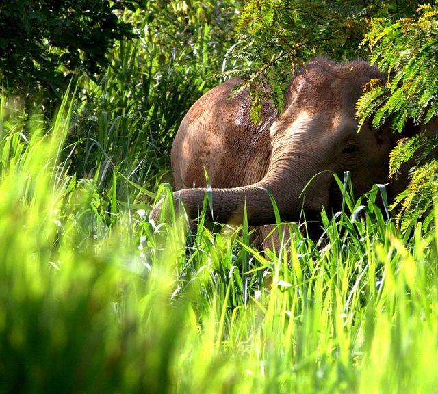 See Elephants and Natural Wildlife at Kui Buri National Park!