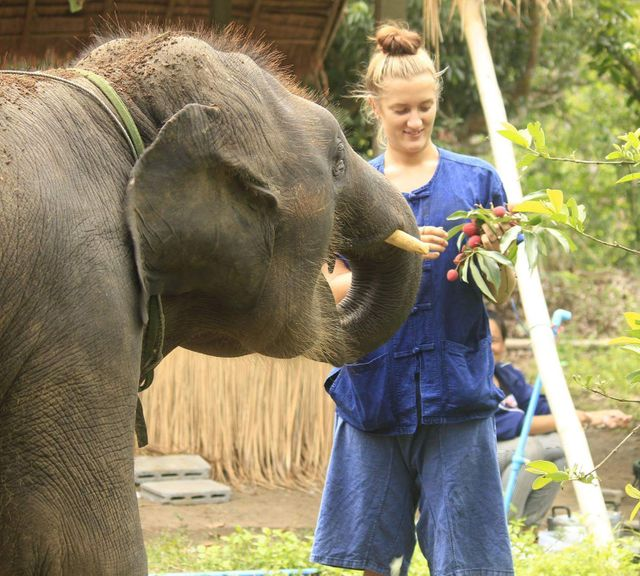 Be an Private Elephant Caretaker & Climb the Sticky Waterfall!