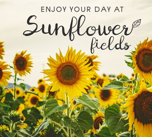 Saraburi from BKK: Sunflower Field Private Tour & Floating Market