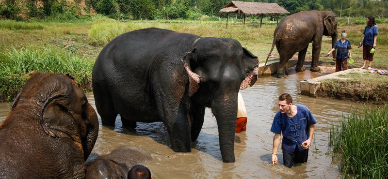 Private Bua Tong Sticky Waterfalls Tour with ethical elephant sanctuary Chiang Mai